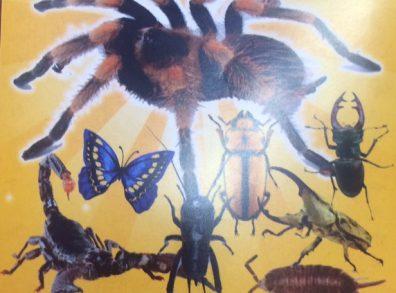 Madárpók és rovarkiállítás plakát