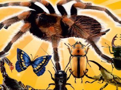 pók kiállítás