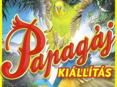 Papagáj kiállítás plakátja
